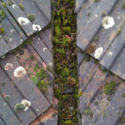 Mos verwijderen op het dak